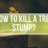 How to Kill a Tree Stump? – 6 Effective Ways