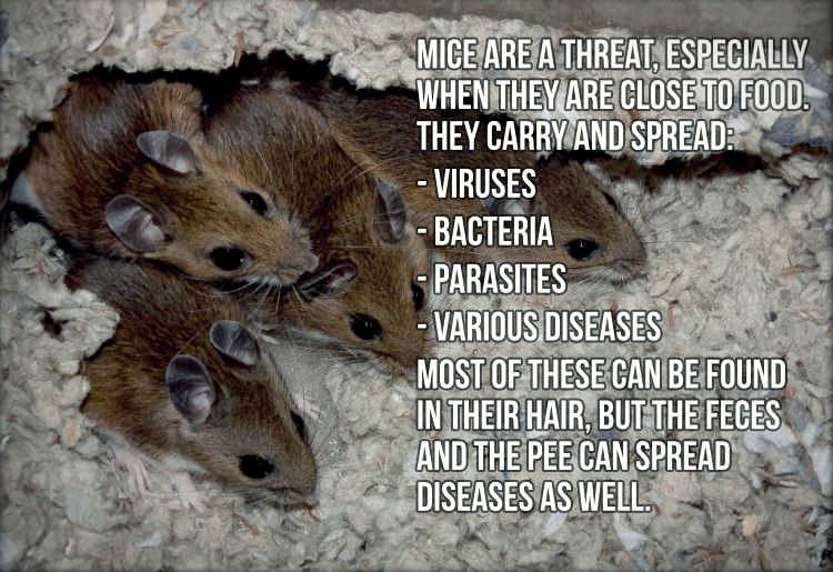 threats of mice in bbq grill