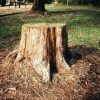 How to Kill a Tree Stump?