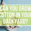 Can You Grow Cotton in Your Backyard?