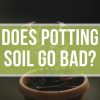 Does Potting Soil Go Bad?