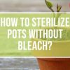 How to Sterilize Pots Without Bleach?