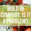 Mold in Compost: How Big of a Problem Is It?
