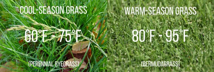 cold and warm season grass