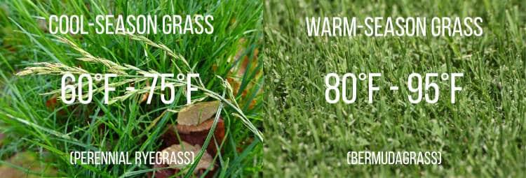 cold and warm season grass