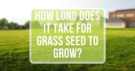 how long does it take for grass seeds to grow