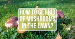 how to get rid of mushrooms in lawn