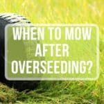 When to Mow After Overseeding?