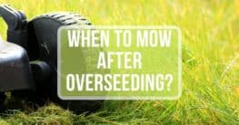 when to mow after overseeding