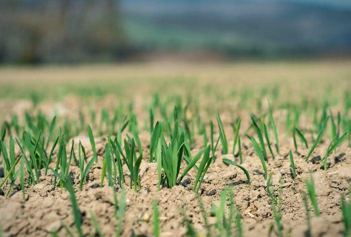 sand on grass
