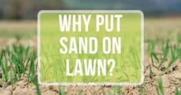 should you put sand on your lawn