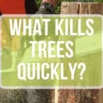 What Kills Trees Quickly?