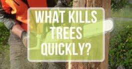 what kills trees quickly text over man cutting a stump with a chainsaw