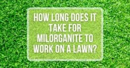 how long for milorganite to wok on a lawn